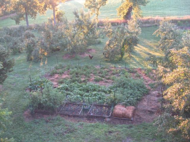 Ruth Stout garden plot