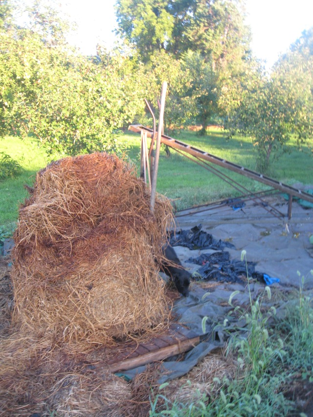 rotten bale of hay for mulch