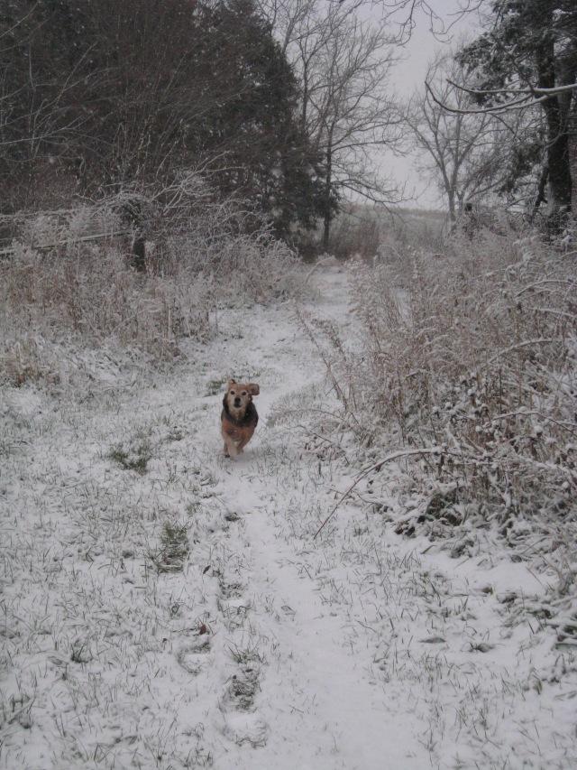 Oscar our beagle