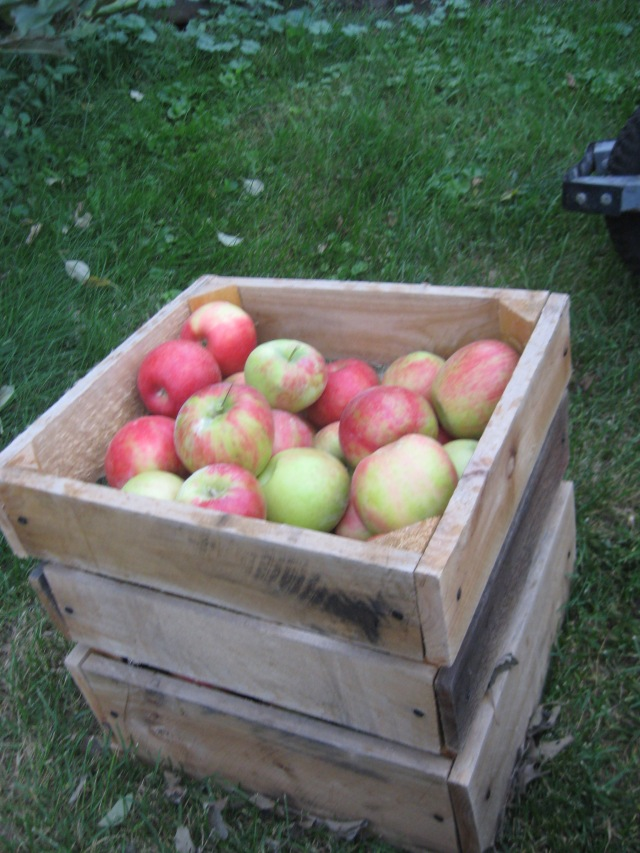2010-honeycrisp-007